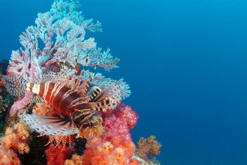4_Feuerfisch © Seychelles Tourism Board