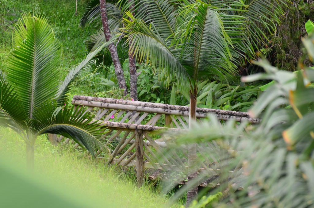 Mauritius – ce poți vizita în nordul și estul insulei 5
