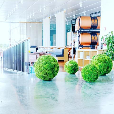 PEREȚII VERZI, cel mai nou trend în design interior 1