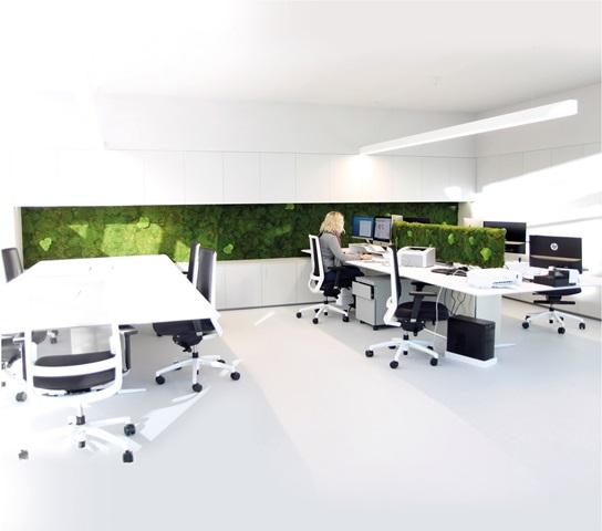 PEREȚII VERZI, cel mai nou trend în design interior 3