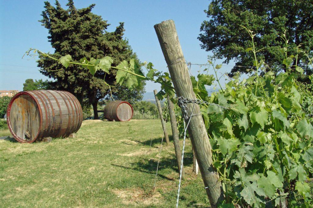 De ce iubim vinurile românești 1